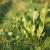 Kako spriječiti širenje hrena u bašti i dvorištu?