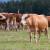 Stočarstvo najrazvijenija poljoprivredna grana u Čoki