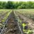 Potpisan Sporazum o navodnjavanju oko 90 hektara obradivog zemljišta