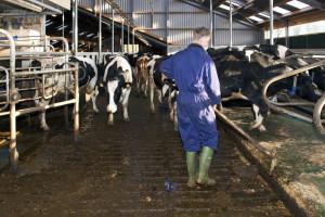 Konkurs za dodelu kredita za nabavku opreme za stočarske farme u Vojvodini