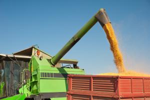 Pad cene kukuruza na Produktnoj berzi