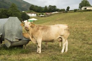 Smanjuju broj stoke zbog nedostatka vode i krmiva