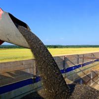 Proteini iz uljane repice bolji do sojinih?