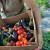 """Kragujevac bez GMO 2021."" - onlajn predavanja o zaštiti životne sredine"