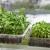 Februar - idealan mesec za setvu povrća u zatvorenom