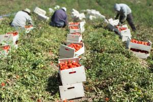 EU: Godišnje bacimo 173 kg hrane po osobi - UN donio odluku