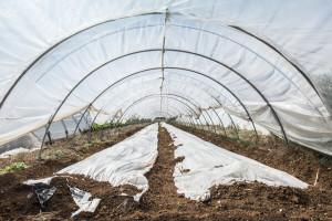 Uz pomoć pokrovnih materijala do boljeg kvaliteta povrća