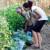 Koja su hranjiva biljci potrebna? Što su makro i mikroelementi?