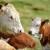Povećali poticaje: U dogovoru učestvovalo i 160 poljoprivrednika