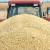 Produktna berza: Kukuruz do 22,8, a soja čak 62 dinara za kilogram
