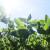 Soja u uslovima navodnjavanja daje siguran prinos - koje su kritične faze?