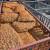Sjemenski materijal stigao u trgovine, cijene nešto niže u odnosu na prošlogodišnje