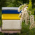 Bagrem izmrzao u zemljama u okruženju - očekuje se rast cene meda
