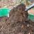 Zrelost komposta odredite i pomoću semena zelene salate