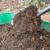 Zrelost komposta odredite i pomoću sjemena zelene salate