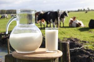 U opštini Sokolac proizvodnja mlijeka ove godine oko četiri miliona litara!
