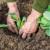 Uzgoj kupusa u plasteniku - uvjeti, rokovi i kultivari