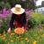 Uzgoj nevena: Sjetva, bolesti i berba
