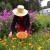 Uzgoj nevena: Setva, bolesti i berba
