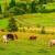 Predstavljena strategija ekonomskog oporavka EU: 15 milijardi evra za poljoprivredu