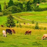 Predstavljena strategija gospodarskog oporavka EU: 15 milijardi eura za poljoprivredu
