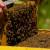 Petir od Marića zatražila smanjenje stope PDV-a za domaći med