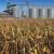 Kukuruz najtrgovanija roba na domaćem organizovanom tržištu