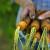 U 2020. godini poljoprivrednicima najveći iznos potpora do sada