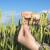 EU preispituje pravila za genetski modifikovane useve