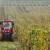 Vrijeme je za gnojidbu vinove loze - na što obratiti pažnju i koje formulacije koristiti?
