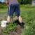 Koje poslove u vrtu obaviti nakon kiše?