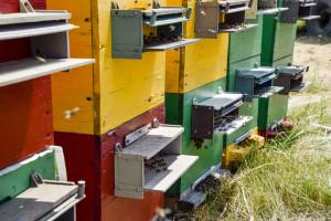 Šta je sve važno prilikom sakupljanja polenovog praha?