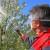 Kako zaštititi višnju u fazi cvetanja?