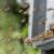 Pčele izlaze iz košnica, ali šta kada ponovo zahladni?