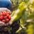 Kako osigurati samodostatnost hrane za svoju obitelj?