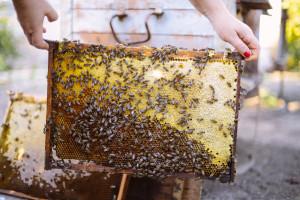 Radmila Jerkov: Ljubav prema pčelama sam nasledila od oca