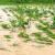 Poplavljeno 350 ha poljoprivrednog zemljišta - usjevima nema spasa?