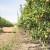 Potaknite organski život tla Unimer gnojivima i Mikorizom te ostvarite potporu u IAKS mjeri 10