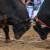 Bik u Posušju teško ozlijedio vlasnika - u teškom je stanju