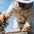 Program potpore pčelarima vrijedan tri milijuna kuna u javnom savjetovanju
