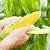 TOP 10: Tko su najveći uzgajivači kukuruza šećerca?