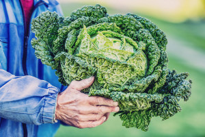 """Zeleno povrće ne može podnijeti 25% ljudi jer imaju """"gorki gen"""""""