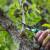Ljetnu rezidbu voćnjaka najbolje obaviti do kraja jula