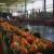 Srbija sve više uvozi sveže povrće iz komšiluka