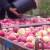 Tko ima jabuke, može očekivati dobru sezonu, ali tu je i novi izazov - drugi val koronavirusa
