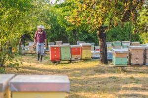 Jeftin uvoz, loše oznake i razređivanje meda - krivci za propast pčelara?