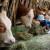 Dokazano: Djeca koja odrastaju na farmama manje obolijevaju od astme