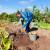 Radovi u rujnu: Berba, skladištenje, priprema zimnice, a čeka nas i sjetva