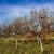 """Jesen je vrijeme za čišćenje voćnjaka i """"plavo prskanje"""" za prevenciju bolesti"""