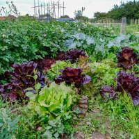 Radovi u lipnju: Sijte, sadite, berite, malčirajte, okopavajte i njegujte biljke